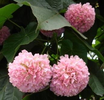 flowersongrounds
