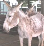 giantdonkey